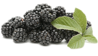 blackberry-image.png